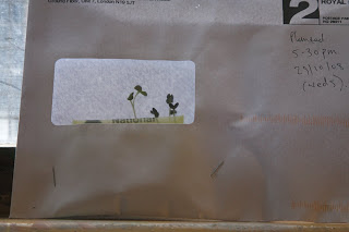 Envelope Garden by Steve Perfect